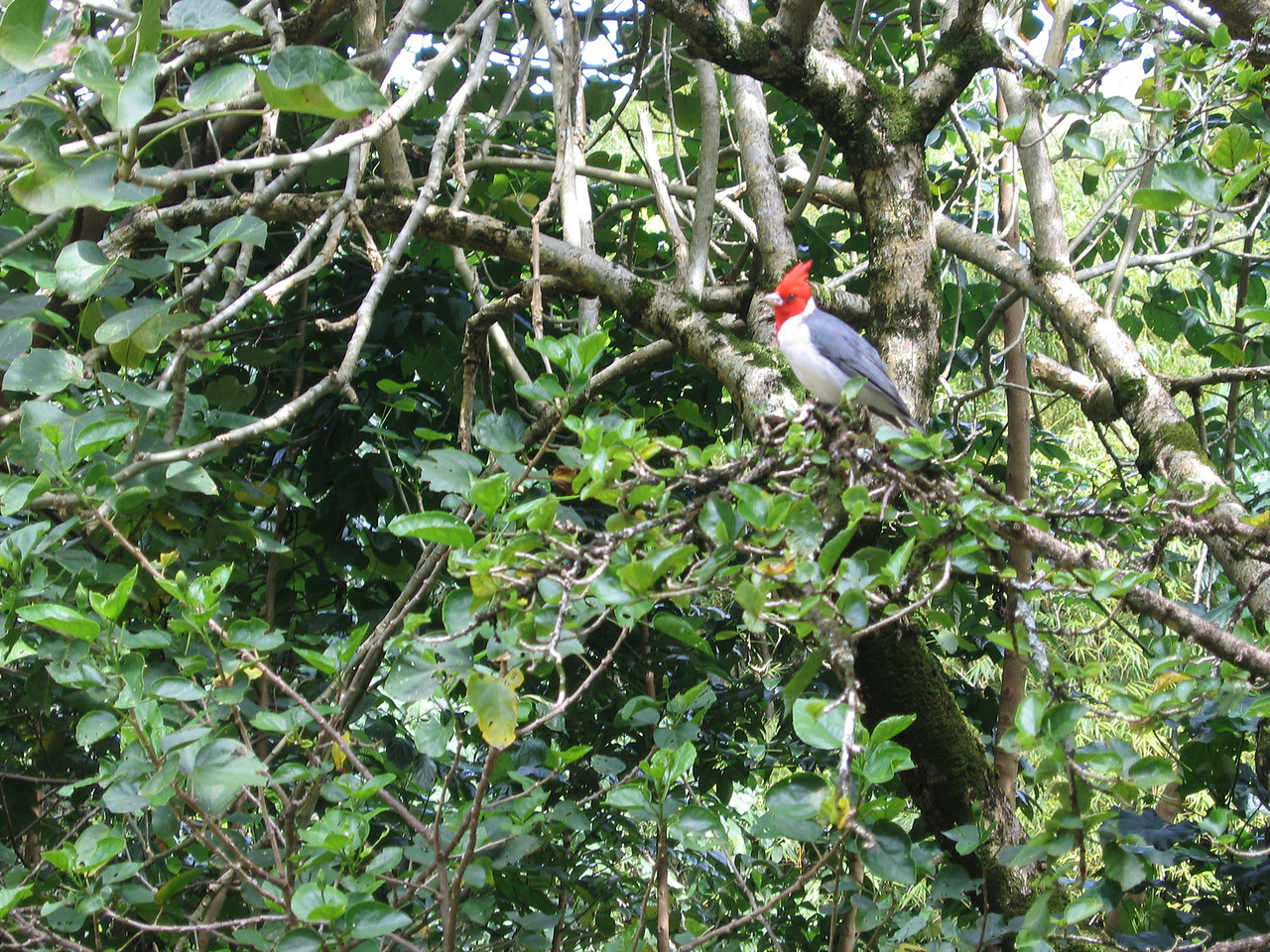 Bird in Waimea Valley