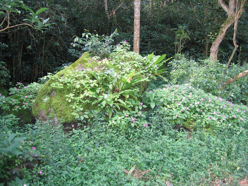 Flowering bush in Waimea Valley