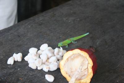 8-16-06 Kona - Inside the cocoa pod