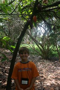 8-16-06 Kona - Nate under the cocoa tree