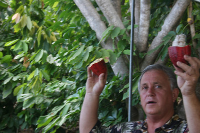8-16-06 Kona - The Cocoa Plant owner showing the inside of the cocoa