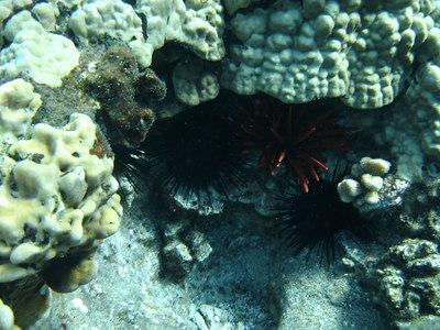 August 15, 2006  Maui - Pride of Maui - Molokini Snorkel.
