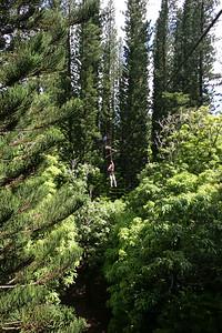 8-17-06 Kauai - Treetop Zipline Eco Adventure - Mom way up high