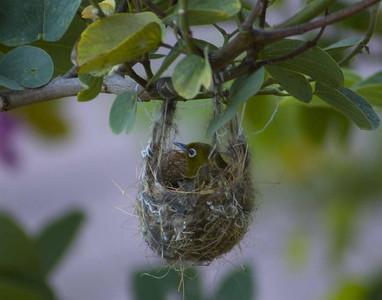 Hanging Birds nest, soo cool!
