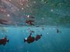 School of fish and snorkeler legs.