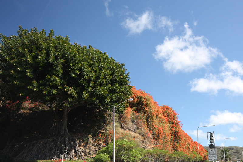 On the way to our driving tour of the East Shore we saw this spectacular wall of bougainvillea at an intersection.