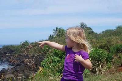 October 12, 2013 -- (North Shore, Waimea, Honolulu County, Hawaii) -- Ada pointing