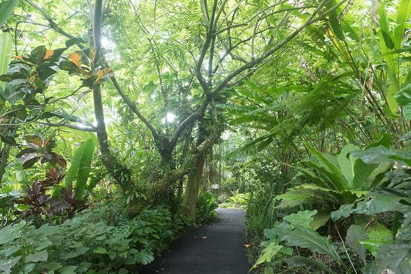 Hawaii Tropical Bontanical Garden
