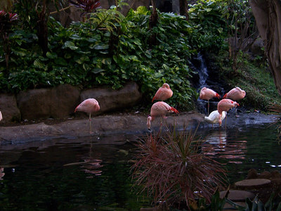 Lobby dwelling flamingoes.  We took one home and put it on our lawn.