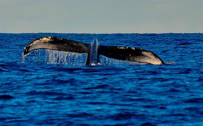 Hawaii, Whales, Friends, Hualalai 2013