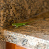 Green Anole next to our barbeque
