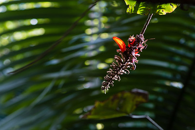 Honeymoon, Day 4: We take The Trek around Na Aina Kai, Kilauea, HI.