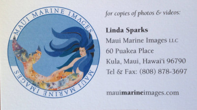 Maui, Day 2:  Maui Marine Images, on board the Four Winds II, out of Maalaea Harbor, Maui, HI.