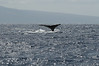 Whale watching 279
