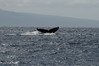 Whale watching 280