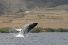 Whale watching 042