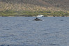 Whale watching 075
