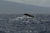 Whale watching 292
