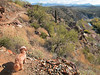 Padraig the wonder dog looks back along the trail.