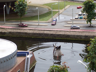 A giant duck invades a canal in Holland! Actually, this is a normal size duck at Madurodam: a theme park with miniature models of famous places throughout Holland.