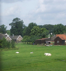 Dutch countryside as seen from the train.
