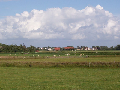 Sheep are a common sight on Texel.
