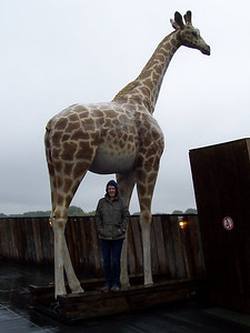 Caroline under one of the giraffes on the deeck of Noah's ark.