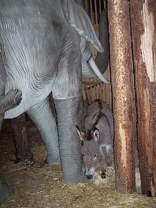 A live donkey is in a pen with two fiberglass elefants in one of the pens on Noah's ark.