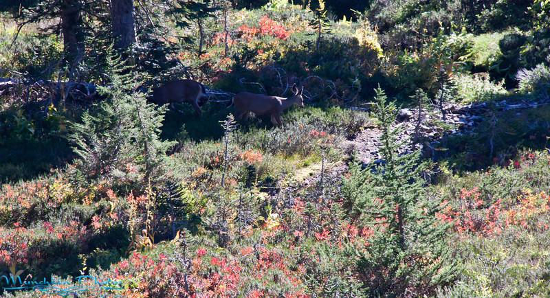 two deer