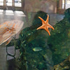 starfish hugging the glass