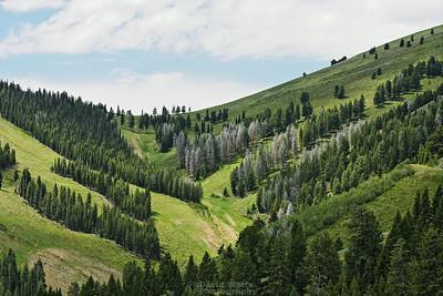 Bald Mountain Ski Trails
