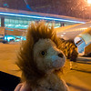 Lion arriving in Bangalore.
