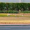 Wild rabbits in Dubai.