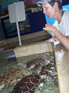 Caroline feeding the sea turtles at the turtle farm on the south end of Isla Mujeres.