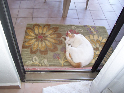 One of the three nearly identical cats that hung around our patio all week.