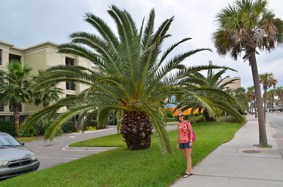 Kathy next to one of the large palm trees on Ocean blvd.