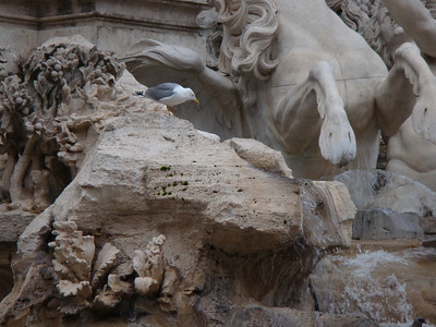 Nov 17 - Trevi Fountain