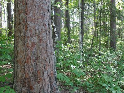 Bohall Trail