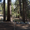 Aspirations of a hiking pole - when I grow up, I want to be a tree.