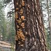Cool fungus!