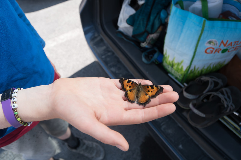 On the way down the trail, we were overtaken by swarms (evidently it's called a kaleidoscope) of California Tortoiseshell butterflies. There was one in the parking lot that Keira tried to save. It didn't want to fly.