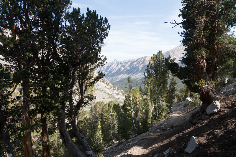 Back in the trees, headed down to Vidette Meadows.