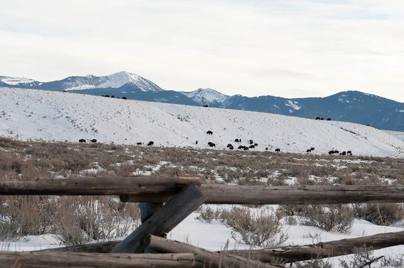 Grand Teton National Park<br /> Dec 2011