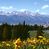 The Tetons in the spring