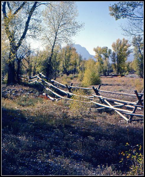 Bucking Rail Fence