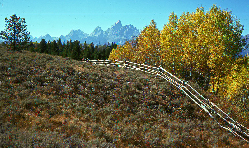 Tetons in fall and the bucking rail fence.