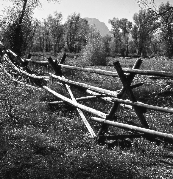 Detail of the bucking rail fence.
