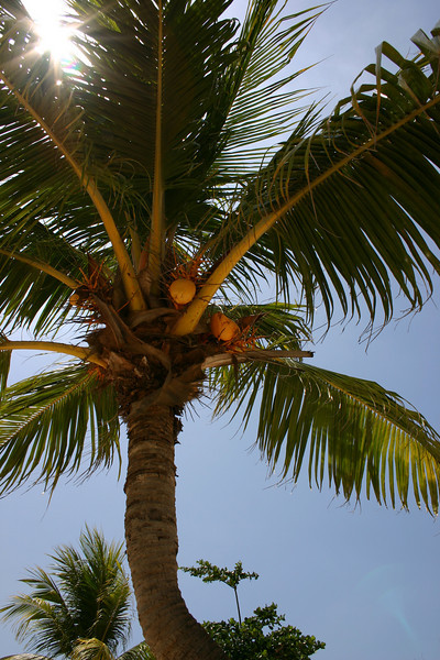 Coconut tree, cloudless blue sky, and the golden sun... wow.