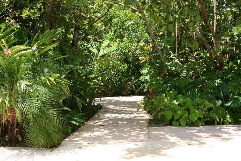 At some resorts, all you see is concrete... at Couples Negril, you're never sure which way a path through the jungle will lead.