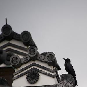 kraai in Sento Imperial Palace